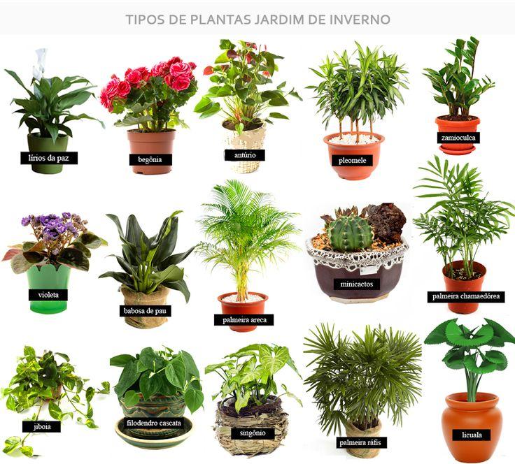 25 melhores ideias de jardim embaixo da escada no for Plantas de interior anturio