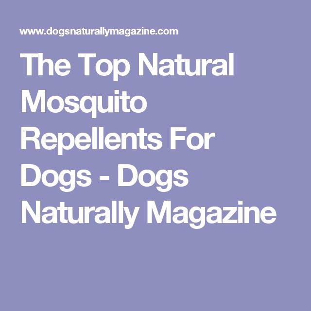 The Top Natural Mosquito Repellents For Dogs - Dogs Naturally Magazine