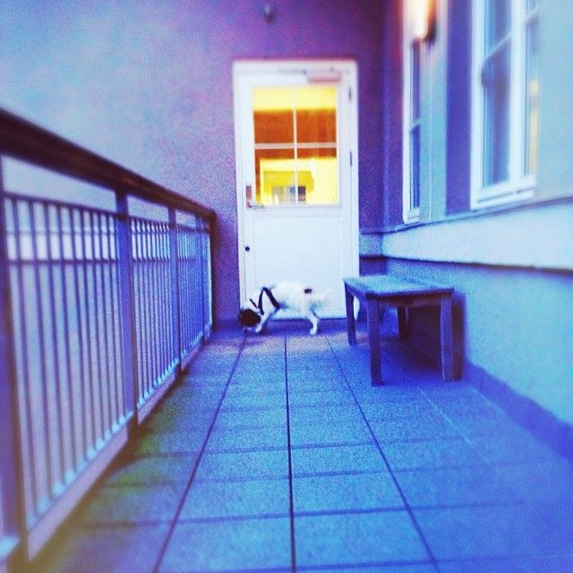 heididahlsveen:  At the end there is yellow light, says the dog. Photo 82014