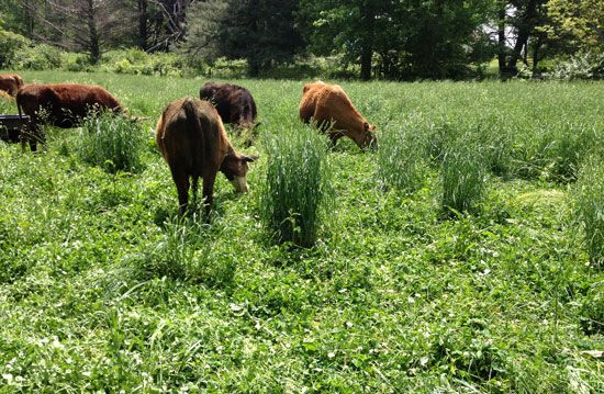 Learn about different types of grass, their growing habits and how to select the right one for your grass fed animals.