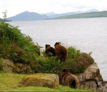 #Skye, il regno magico della Gran Bretagna (FOTO) |I posti più belli