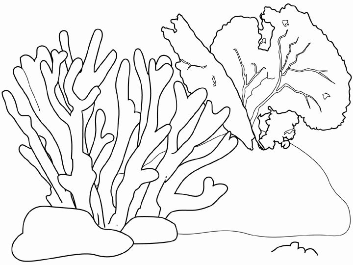 seaweed coloring pages for mermaid bathroom mural | Cottage ...
