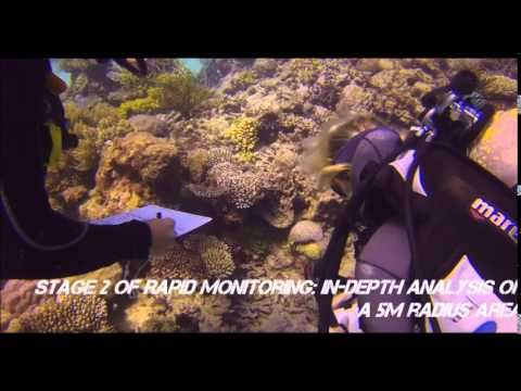 Eye on the Reef - Rapid Monitoring Marine Conservation Program Great Barrier Reef, Cairns