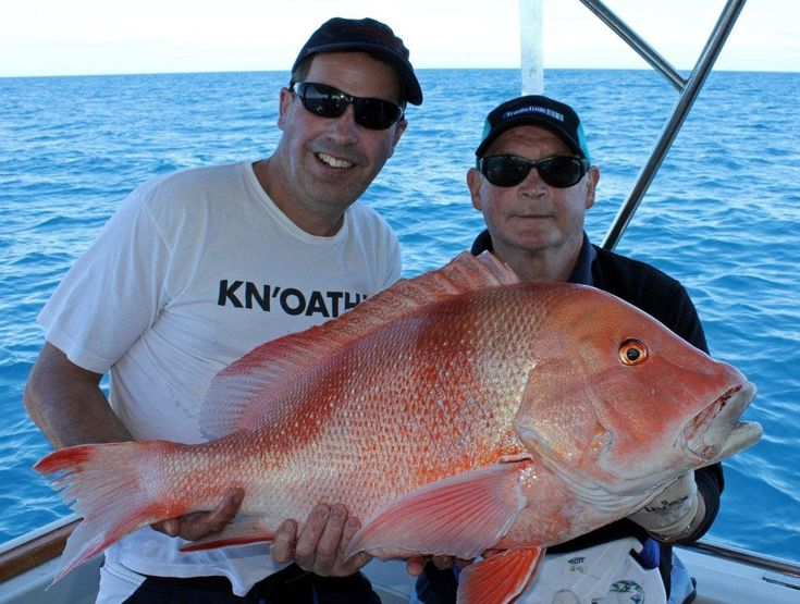 1000 images about deep sea fishing on pinterest sharks for Big fish in the ocean