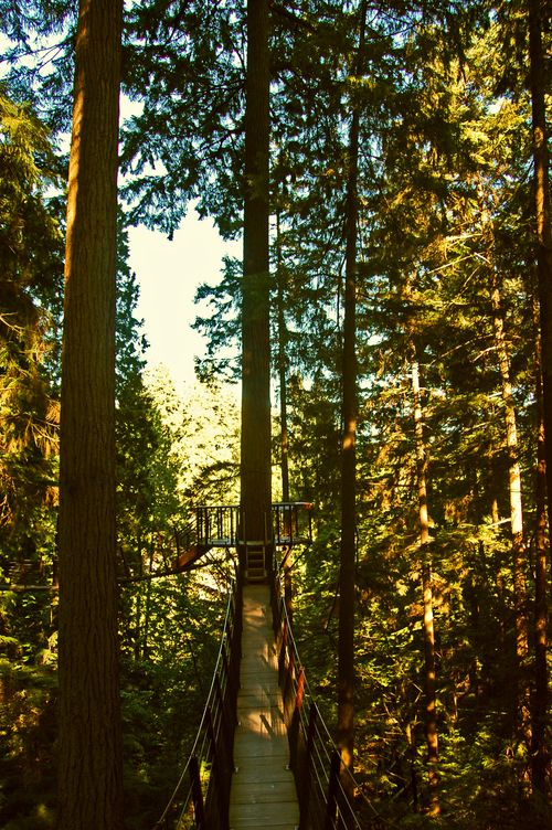 Treetop adventures near the Capilano Bridge
