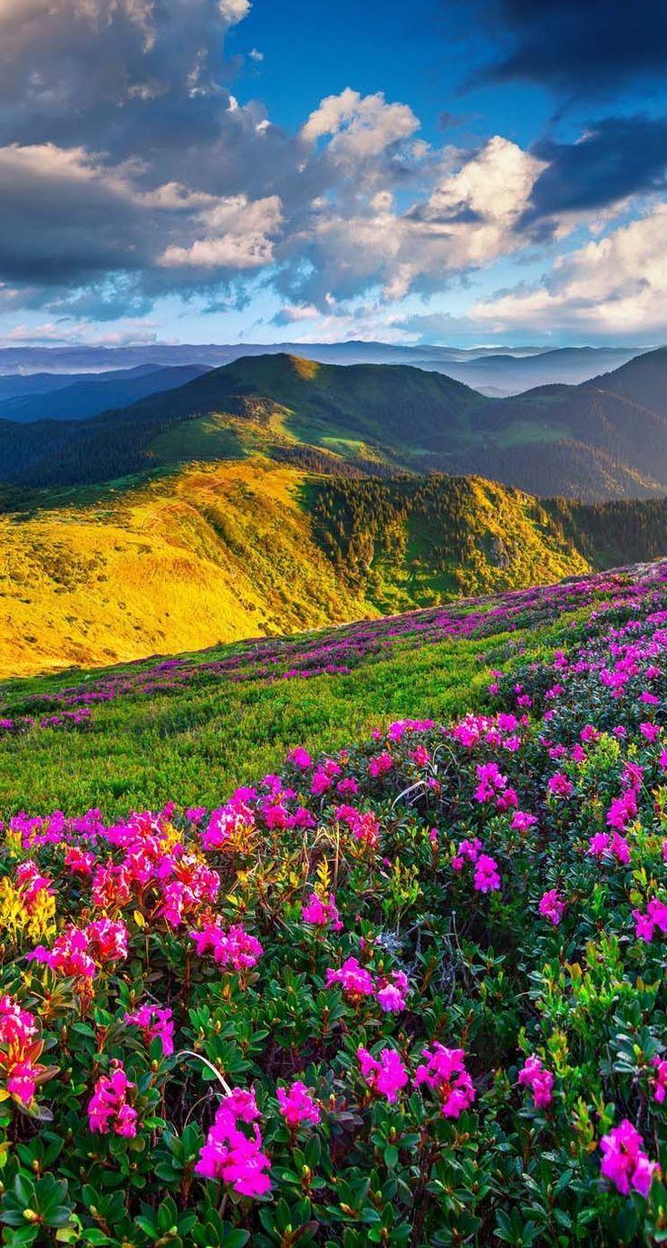 Beautiful Landscape With Beautiful Flowers Beautiful Nature Landscape Pictures Landscape