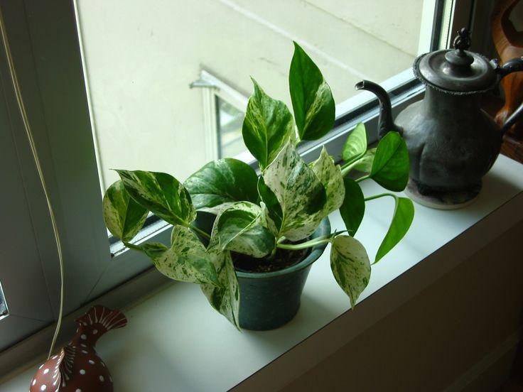 86 best interior plants designs & ideas images on pinterest