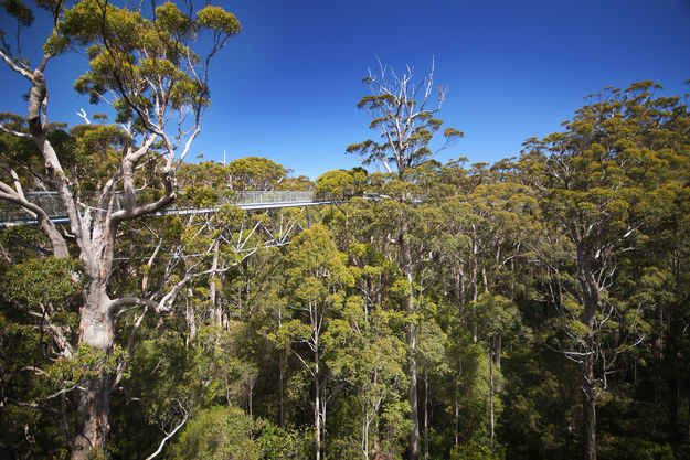 Valley of the Giants Treetop Walk, Western Australia.