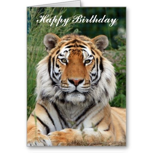 The 104 Best Greeting Cards For Animal Lovers Images On Pinterest