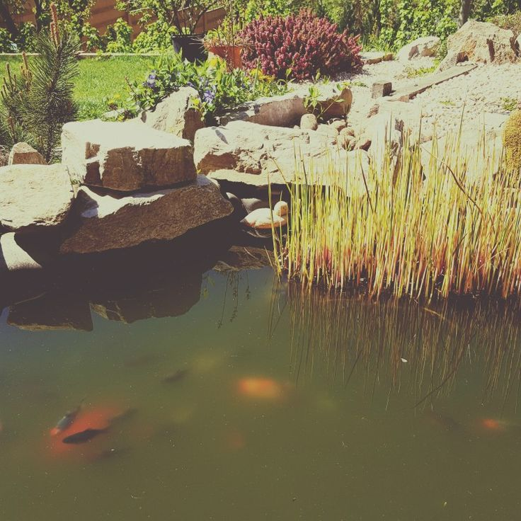 Máme veľa rýb