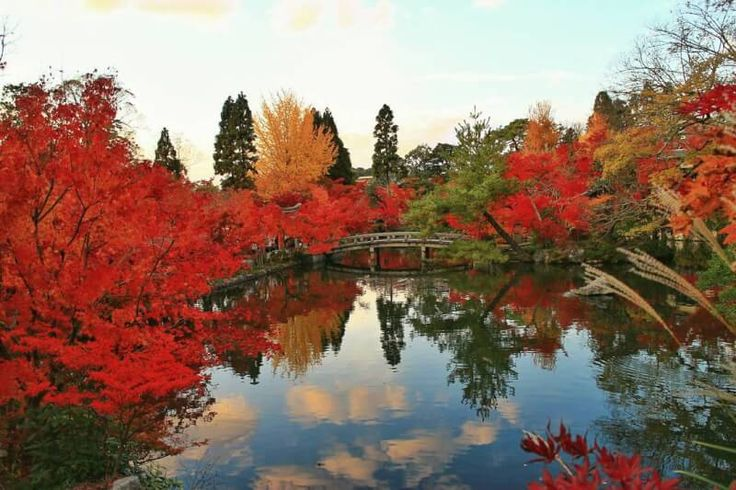 野趣あふれる自然の紅葉や、歴史ある古刹を彩る紅葉。京都には、紅葉の名所が数多くあります。ここでは、そんな名所の中からとくに「庭園」にスポットを当てて、美しい紅葉を楽しめる庭園を10ヶ所ご紹介します。あなたも秋を探す旅へ出かけてみませんか?