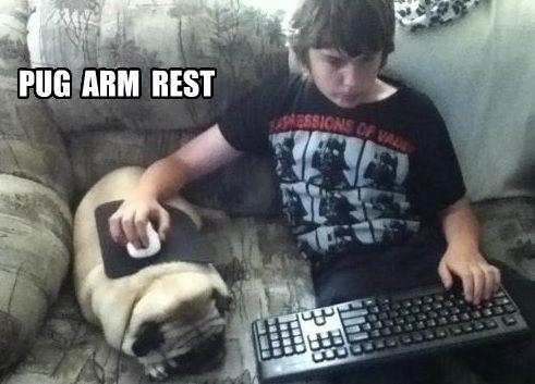 552 best FUNNY PUG DOG MEMES LOL images on Pinterest ...