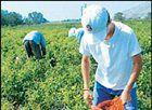 Ανατροπές σε εισφορές και συντάξεις 700.000 αγροτών  [Euro2day.gr]