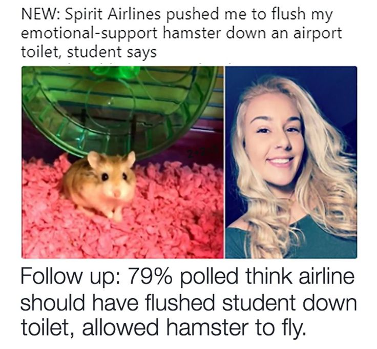"""Really?!? This """"emotional support animal"""" thing is being abused. EVERYONE needs to put an end to this. So stupid..."""