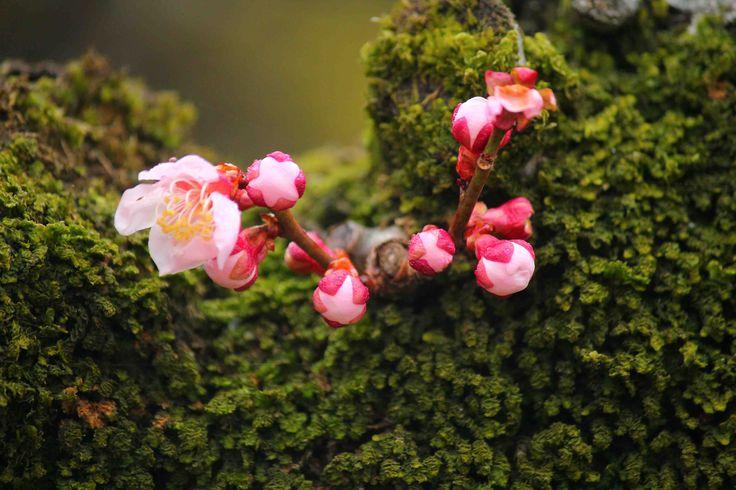 Decouvrez les secrets des fleures japonaise  vidéo youtube www.youtube.com/watch?v=WNjYOeT7DEw