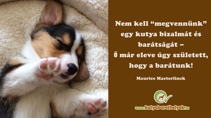 """""""Nem kell """"megvennünk"""" egy kutya bizalmát és barátságát, – ő már eleve úgy született, hogy a barátunk!"""" Maurice Maeterlinck  #kutya #idézet #kutyásidézet #dog #quotes #kutyabaráthelyek #kutyabarathelyek"""