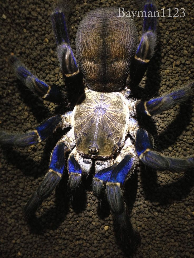 17 Best images about Spiders on Pinterest | Giant spider ...