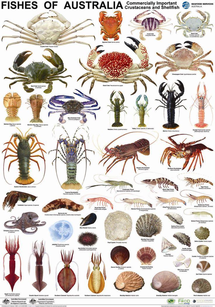 Poster crustacean 1 134 1 620 pixels fyi for Names of fish
