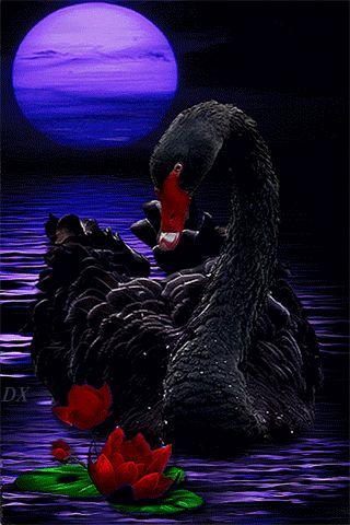 Black Swan - Animation Telefon №1370168