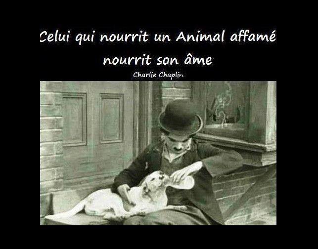 """Charlie Chaplin """"Celui qui nourrit un animal affamé nourrit son âme."""""""