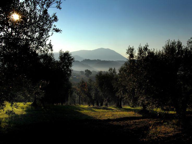 Le dolci colline della Sabina. Sapore di casa.