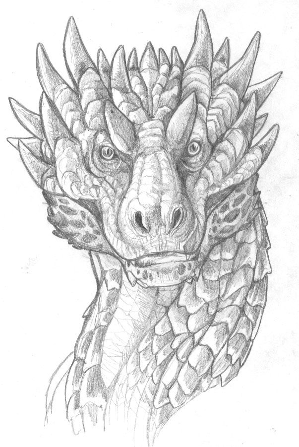 Dragon-face by Abigail L. Hamaker  Nice