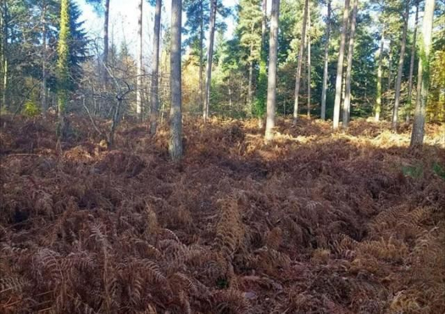 Officially...Archangel641's Blog: Spot the dog: Can you see the pooch hiding among t...