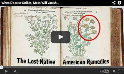 Here are some of the medicinal plants that were commonly used and foraged for by the Cherokee tribe. However, the following plants were used by this tribe