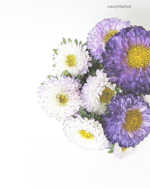 Good Morning IG! I hope everyone is having an amazing day as it is #friday  Here in #london and the weather has turned abit wet and cold. You can find on #etsy and get a little #pampering from our #naturalskincare  #flowers #purple #art #design #photography #photographer #scottishblogger #londonblogger #londonbylondoners #botanical #flora #flowerchild
