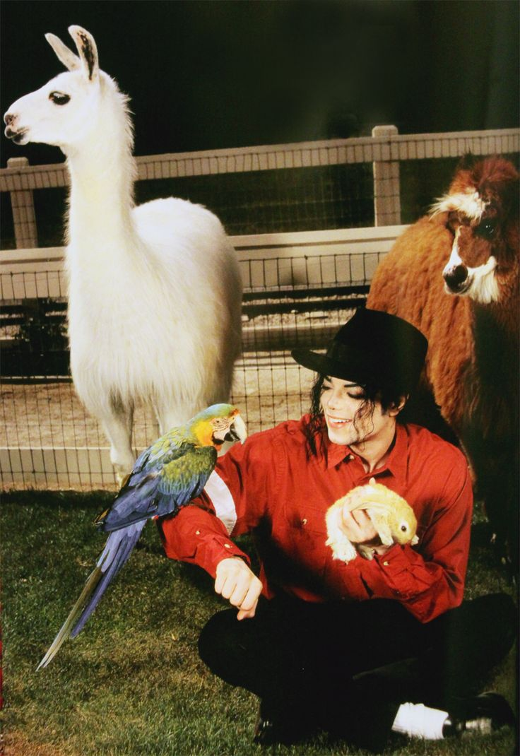 Michael Jackson with pets
