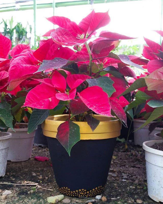 más de 25 ideas increíbles sobre plantas en maceta al aire libre