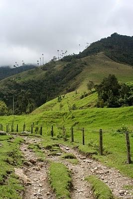Valle de cocora, Colombia. Colección fotográfica de la Clínica de Artrosis y Osteoporosis www.clinicaartrosis.com PBX: 6836020, Teléfono Movil: 317-5905407 en Bogotá - Colombia.