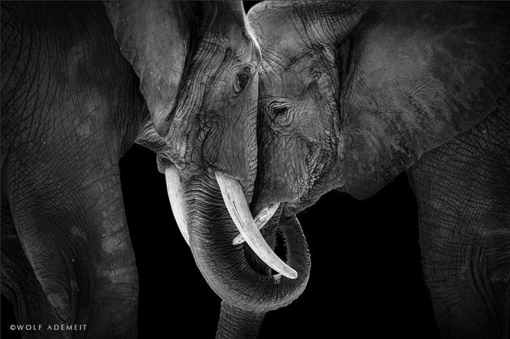 Elephant Love: Photographer Shows The Emotional Side Of Giants | Bored Panda