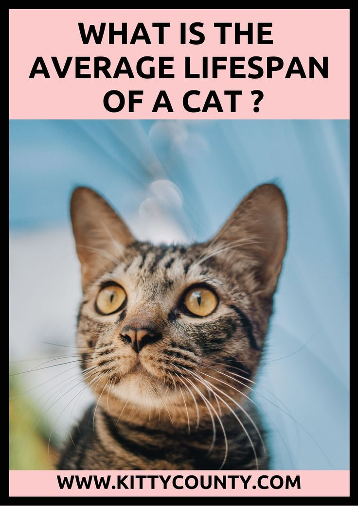 Lifespan Of A Cat An Insight Into Cat Average Life Span Cats Cute Baby Cats Feral Cats
