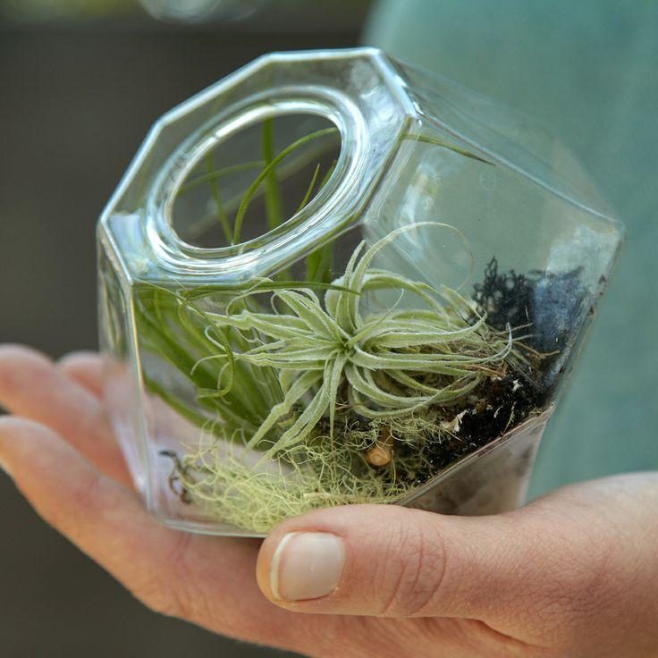 Green Gem Asparagus: Indoor Plants Images On Pinterest