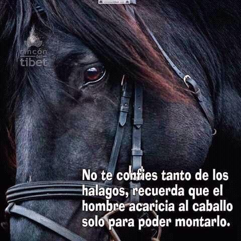 〽️ No te confíes tanto de los halagos, recuerda que el hombre acaricia al caballo solo para poder montarlo.