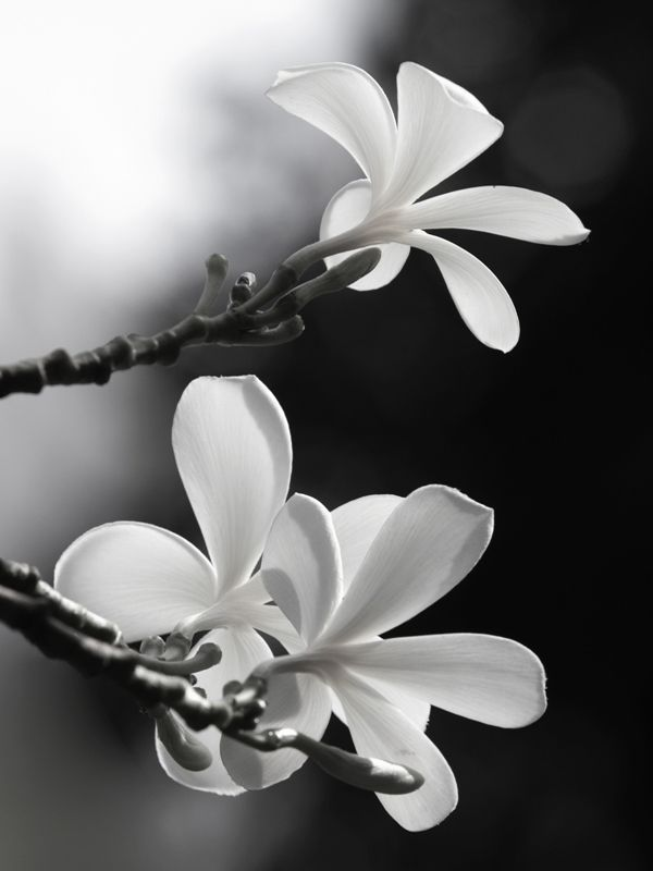 90 best Garten und Blumen images on Pinterest | Black n white, Black ...