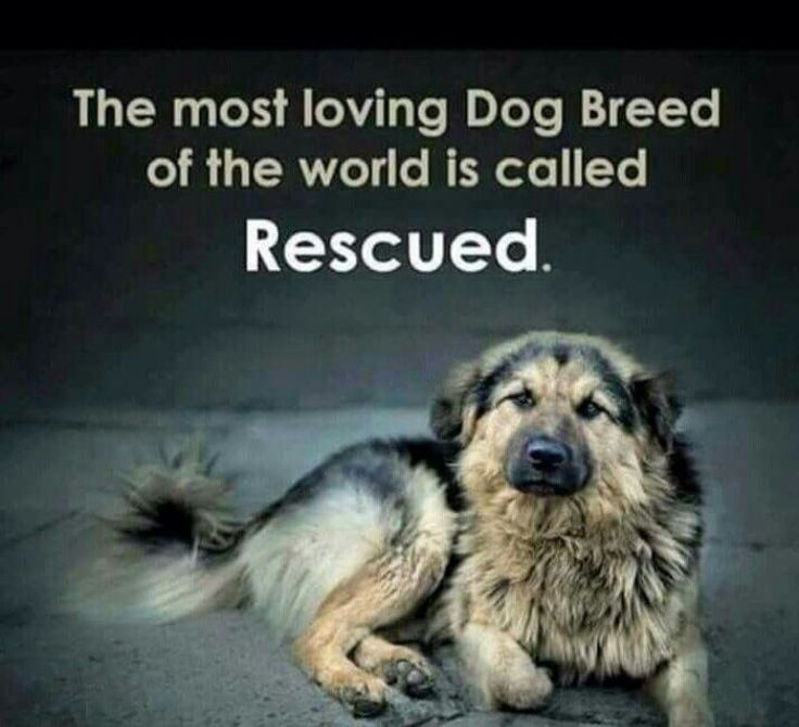 Exactly!!! Rescued dogs are the ONLY ones that truly love you and appreciate everything you do!!! So DON'T waste your money on some expensive, fancy and I don't know what breed and just go and ADOPT one from your local rescue center and you will gain yourself a loving friend for a lifetime! ❤