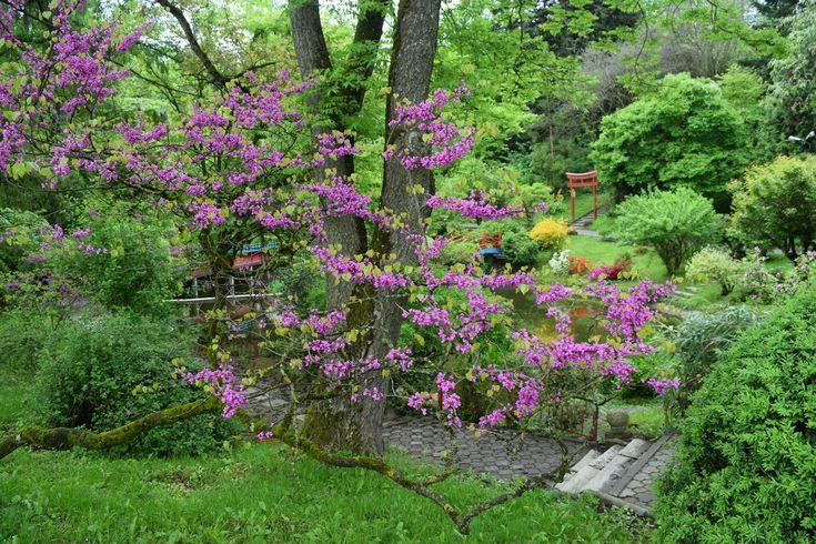 Le jardin botanique de Cluj est l'un des plus riche de Roumanie, surtout par ses serres et champs de fleurs.