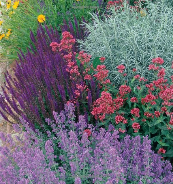 Nepeta Walkers Low, salvia, artemisia, and autumn joy sedum could give you this look. Designer Plant Combinations: 105 Stunning Gardens Using Six Plants or Fewer : Scott Calhoun