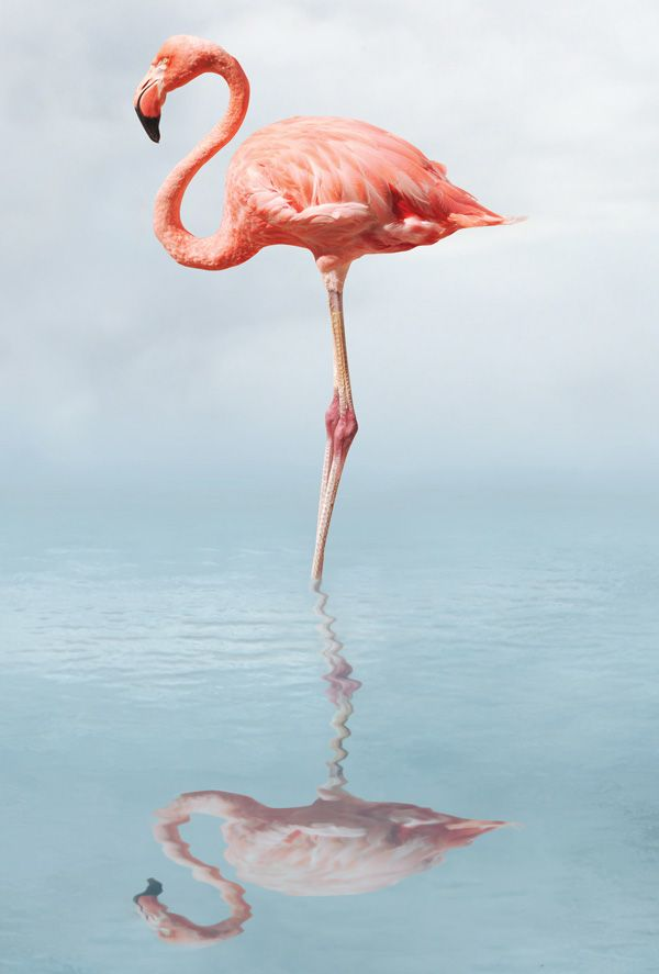 flamingo from Postallove