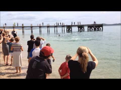 2014 March Orca at Maraetai New Zealand - YouTube