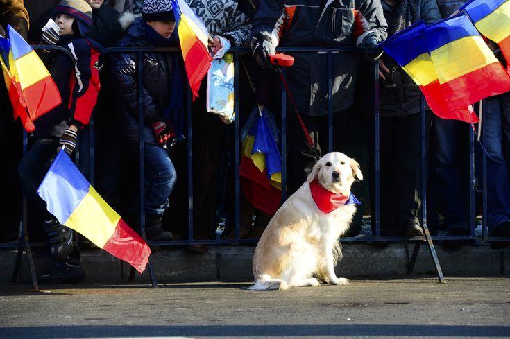 Un câine este ţinut în lesă de stăpânul său, în timpul paradei militare, organizate cu ocazia Zilei Naţionale a României, în Bucureşti, duminică, 1 decembrie 2013. (  Marius Dumbrăveanu / Mediafax Foto  ) - See more at: http://zoom.mediafax.ro/news/1-decembrie-2013-11733842#sthash.6ZXvmsOH.dpuf