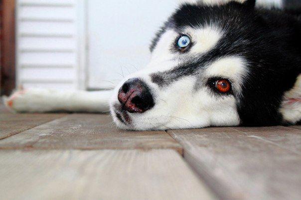 Собаки - восьмое чудо света!