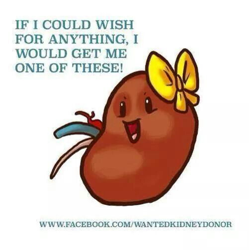 how to become a kidney donor