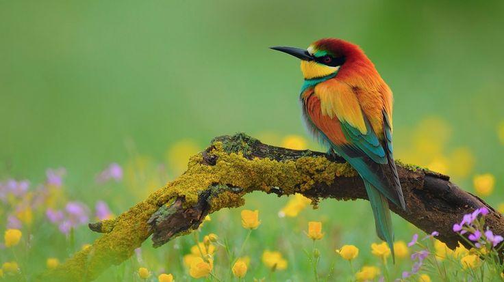 Flowers colorful bird wallpaper series 1