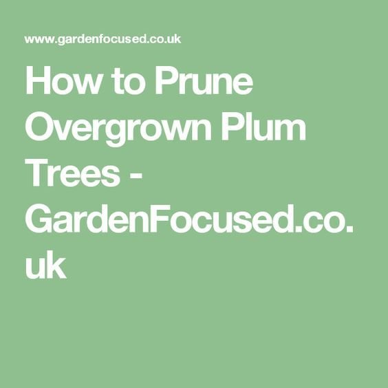 Best 25 Pruning Plum Trees Ideas Only On Pinterest