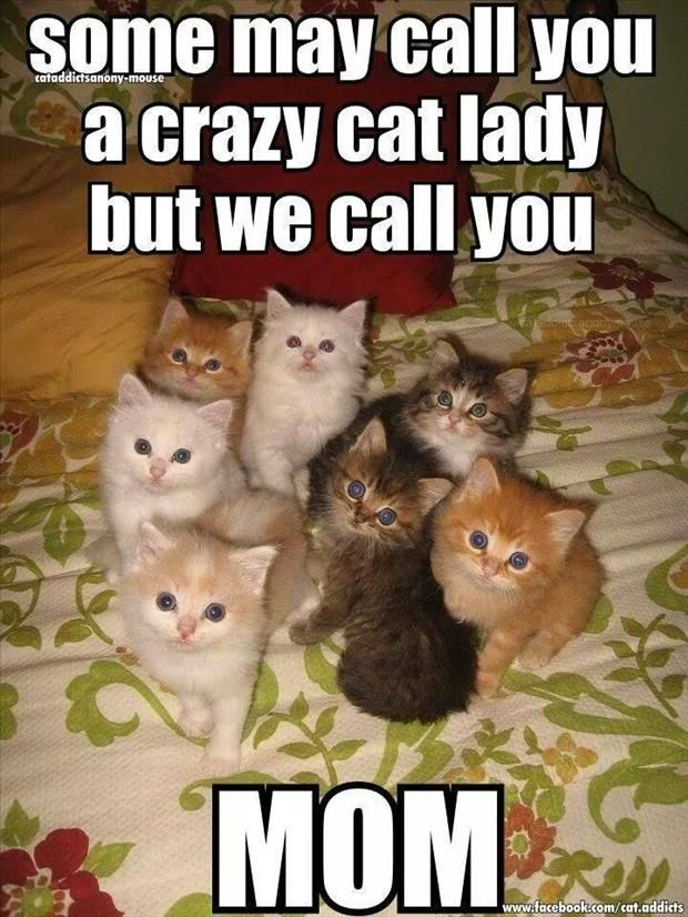 "How the mantle of crazy cat lady gets pass. "" You don't choose the crazy cat lady life, they choose you, ONE OF US, ONE OF USE """