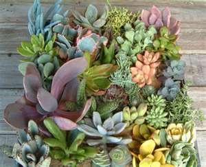 Colorful succulents.