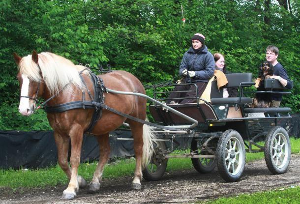 Po želji vas po Barju zapeljejo s konjsko vprego